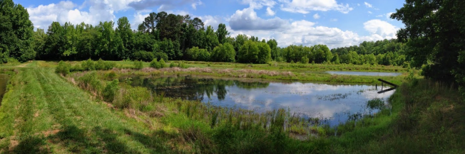 Pintar ponds