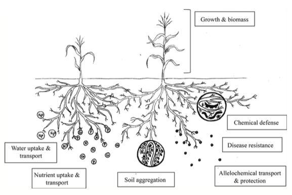 Ecology Fig1