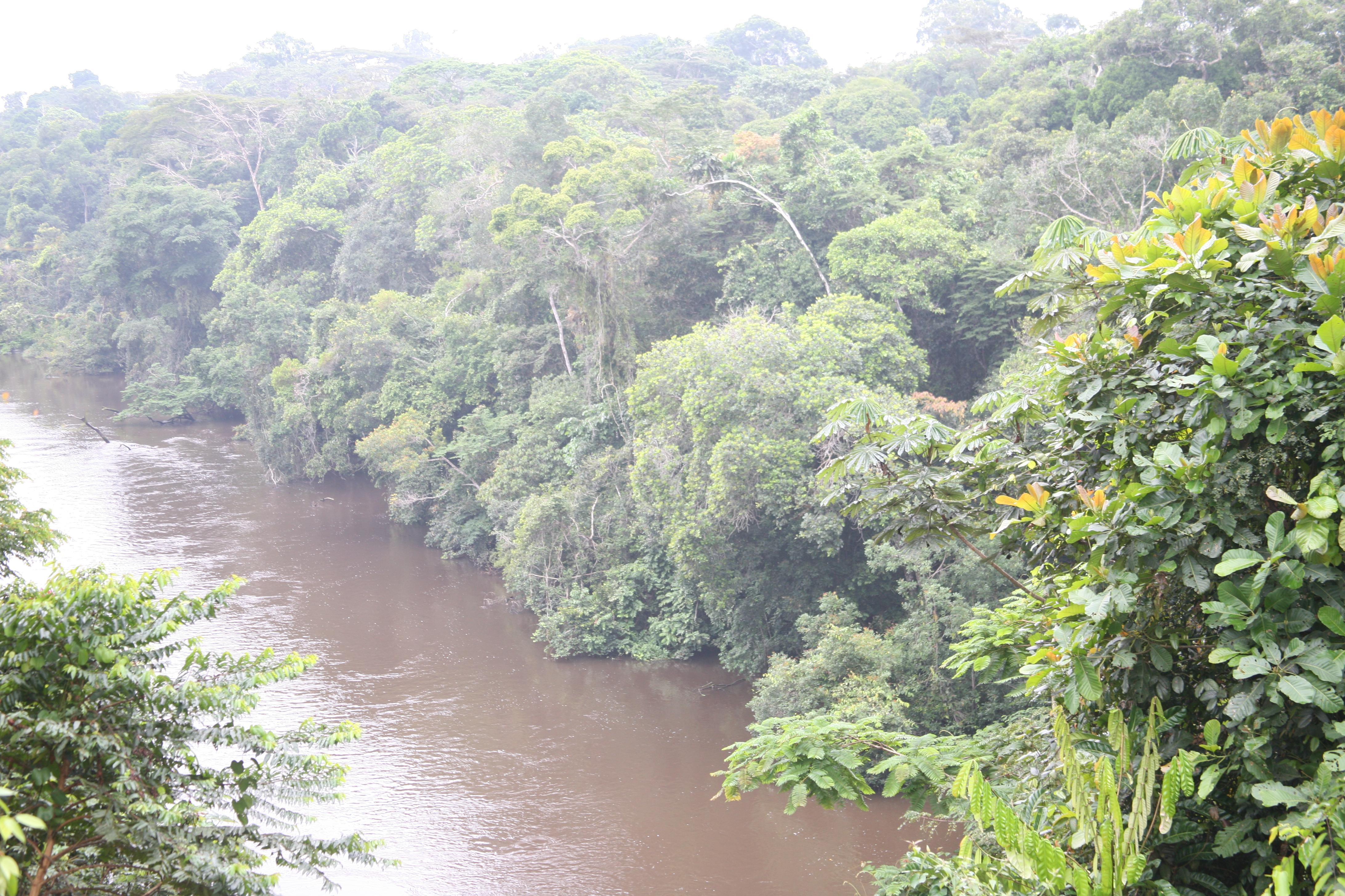 Fluss_Dja_Somalomo