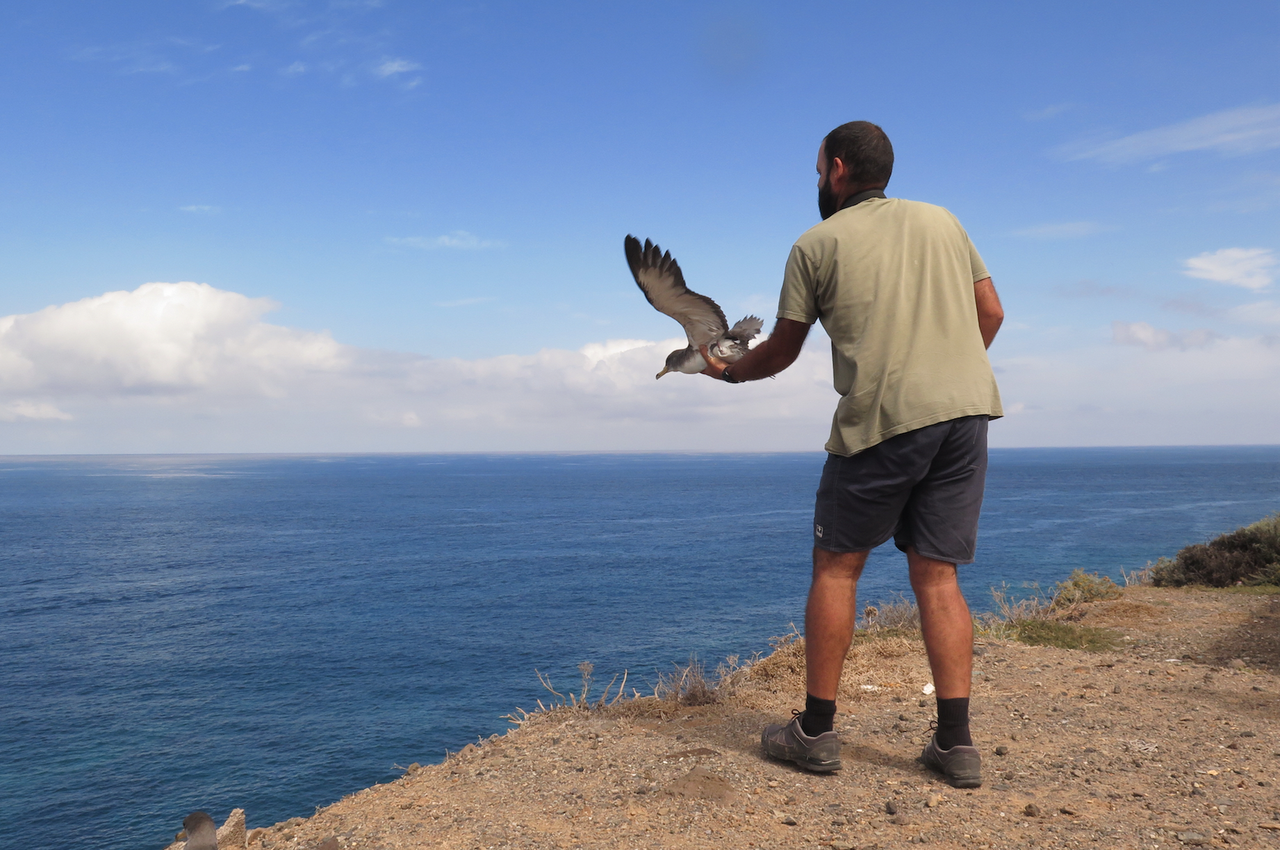 Release of a grounded shearwater. Photo Nazaret Carrasco (1)