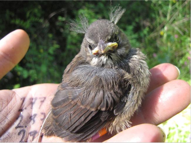 sparrowbaby