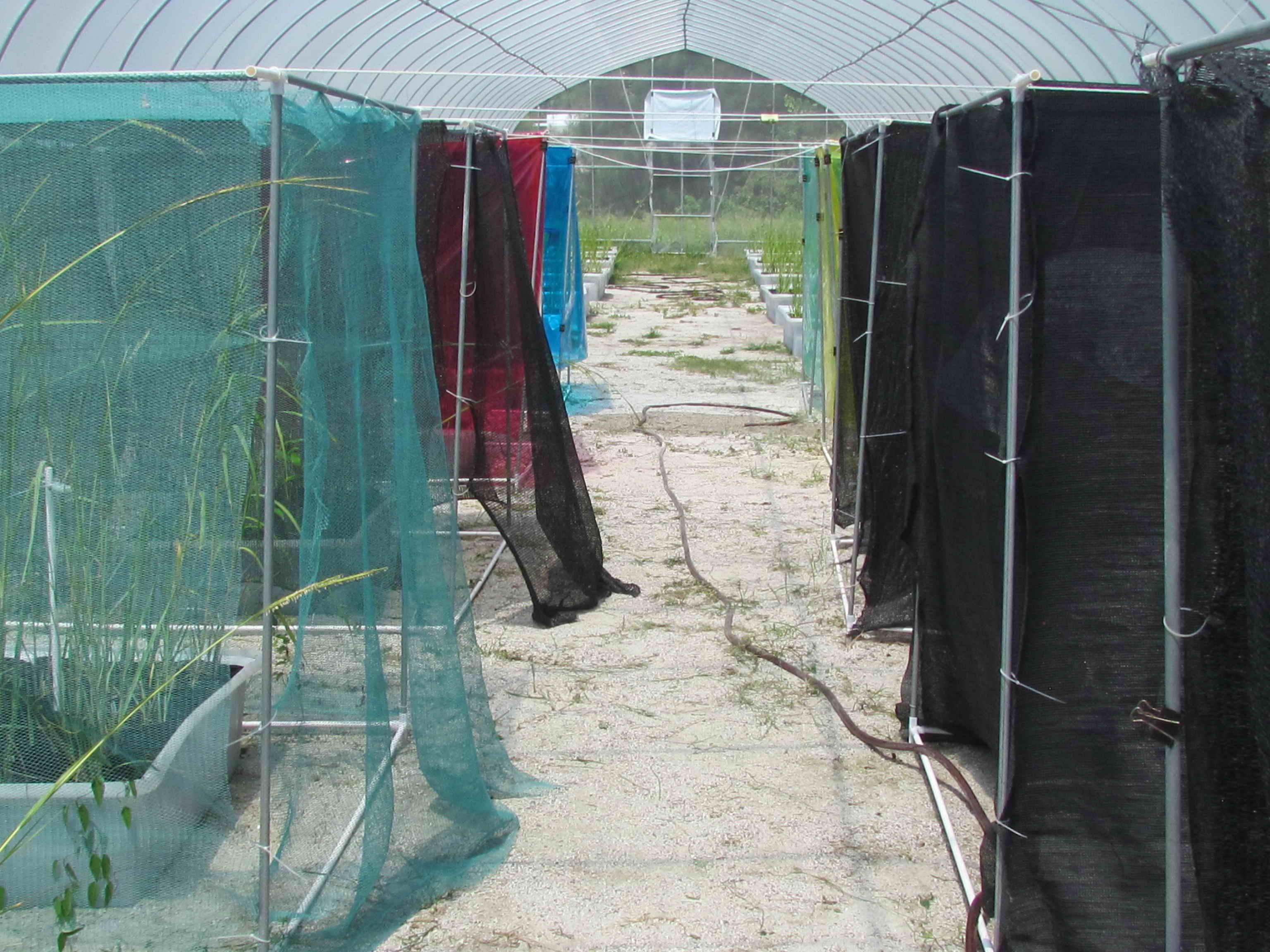 Greenhouse setup