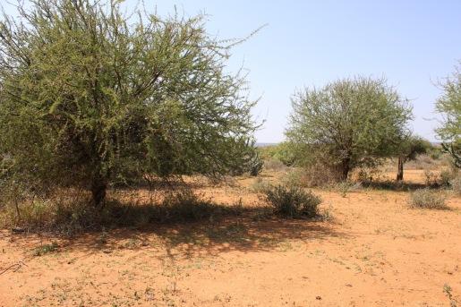 MRC landscape