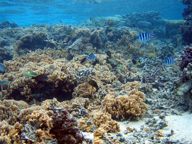 Moorea Coral Reef LTER site